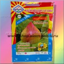Семена тайского лотоса 10 штук