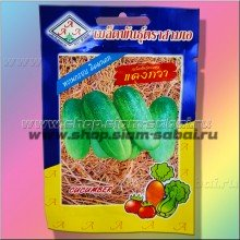 Семена тайских огурчиков